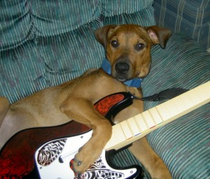 """Dude, that song was by my band, Gone to the Dogs."" Photo by jdurham. Courtesy of Morguefile.com"